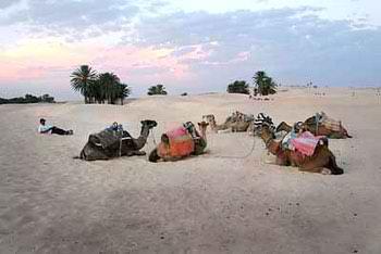экскурсия в сахару из джербы